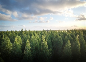 Paper Production and Sustainable Forestry